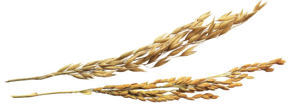spike brown rice