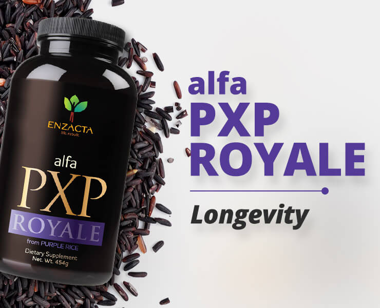 PXP ROYALE: Foodness & Dynamism